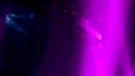 عاهرة نحيفة ، تحصل رايلي فاير على لعبتين جنسيتين ضخمتين داخل كسها الرطب المبلل ، في نفس الوقت